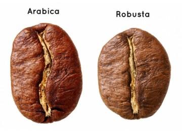 В чем разница между арабикой и робустой