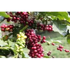 Кофе GM Coffee Сальвадор фреш обжарка в зернах 1 кг